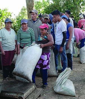 El Salvador 2016 Coffee Pickers weighing bags of coffee cherry during harvest seen on Caffe Ladro and Ladro Roasting Coffee Buying trip