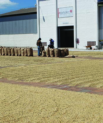 Coffee drying beds in front of Bourbollon Mill in El Salvador 2016 from Caffe Ladro and Ladro Roasting coffee buying trip