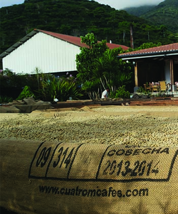 Cuatro M drying beds in El Salvador from Caffe Ladro Ladro Roasting coffee buying trip