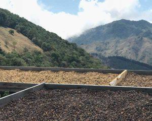 Drying Beds at Santa Teresa in Costa Rica 2100 meters