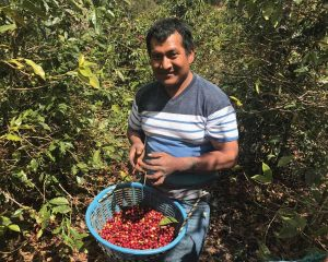Juan Carlos, coffee picker at Finca Catalan from 2017 Guatemala coffee buying trip for Ladro Roasting