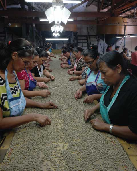 Highlighting coffee sorters on 2017 International Women's Day