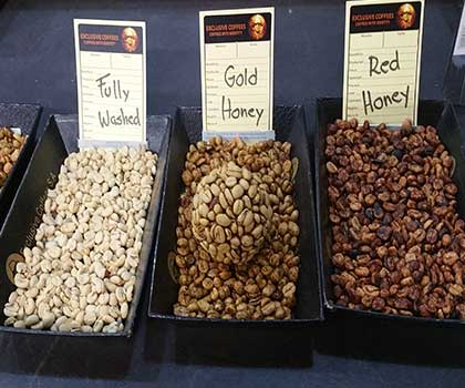 Honey Process Coffee pictured showing different amounts of mucilage left on the coffee bean which impacts the coffee flavor