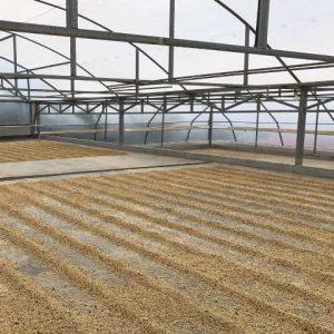La Perla drying floor from Ladro Roasting Spring 2017 Coffee Buying trip