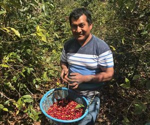 Coffee Picker at Finca Catalan on Spring 2017 Guatemala Coffee Buying Trip