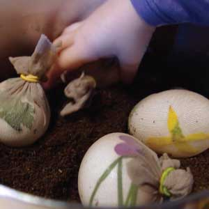 A Child's hand places eggs with grass and flowers designs in nylon into sauce pan with coffee grounds, water and vinegar
