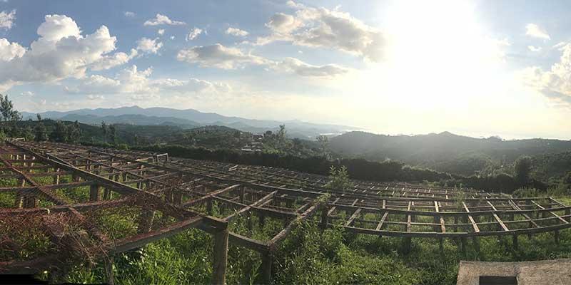 2017 Africa coffee buying trip view of drying beds in Rwanda at Kopakoma